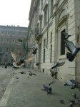 Pigeons - Rome